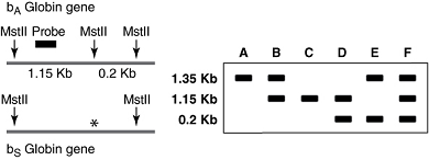 usmle-rx-step-1-qmax-challenge-1226